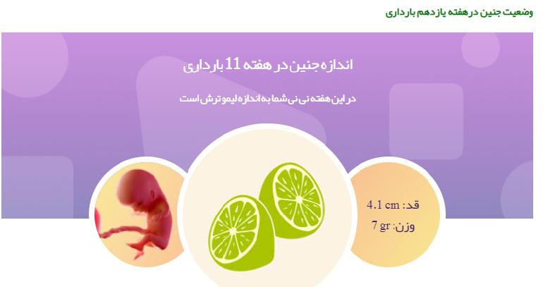 وضعیت جنین در هفته یازدهم بارداری111