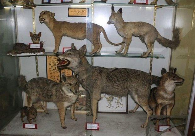 موزه تنوع زیستی