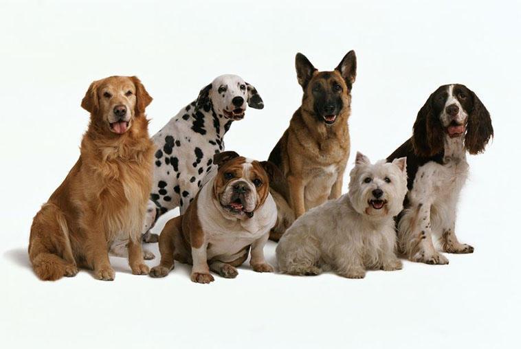 انواع سگ11