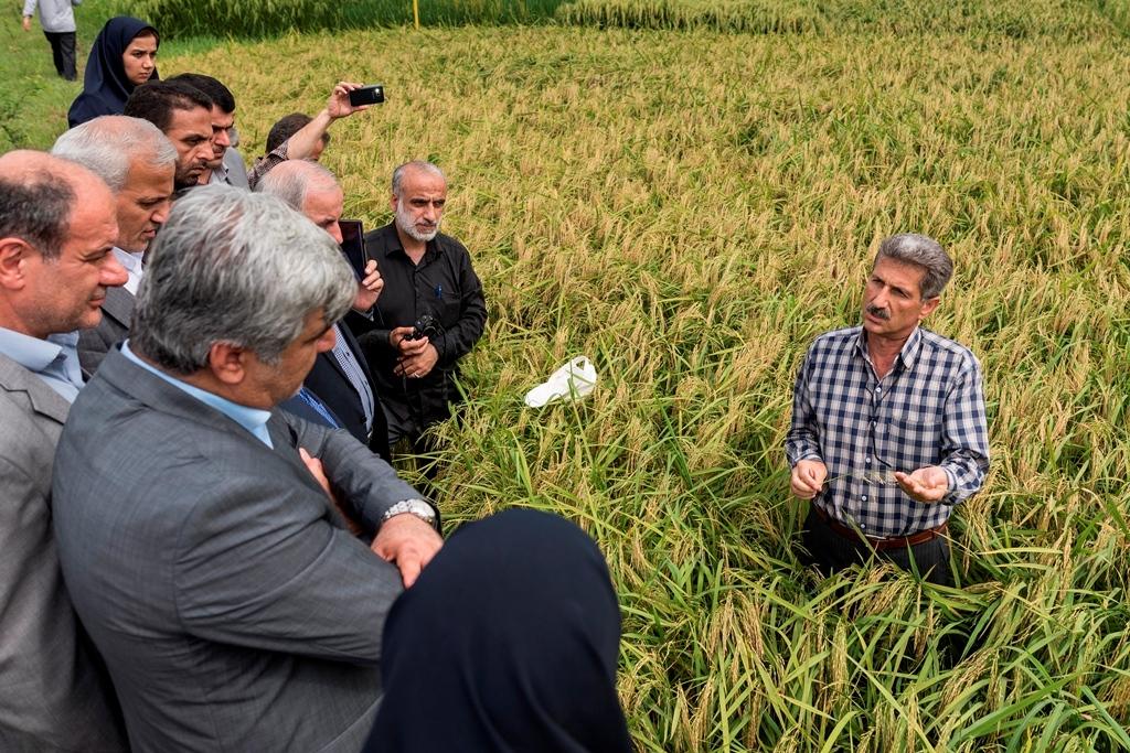 جلسه+  کمیته تخصصی برنج