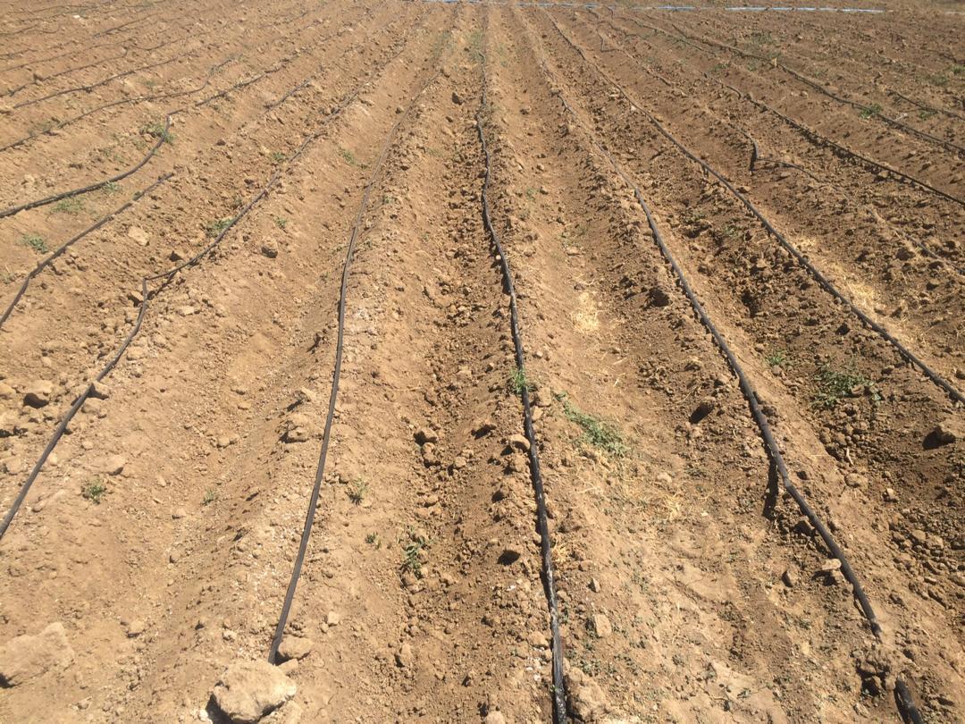 جهاد کشاورزی همدان