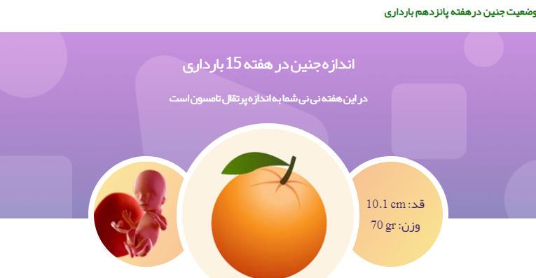 وضعیت جنین درهفته پانزدهم بارداری