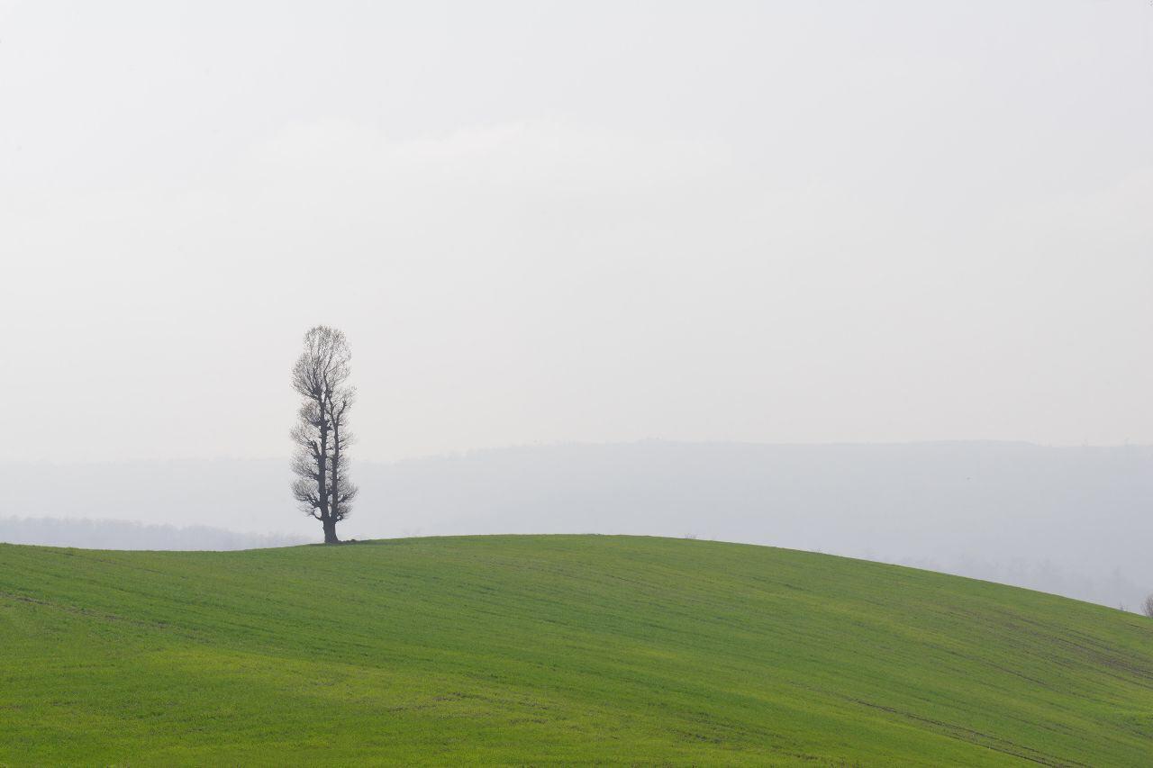 درخت کاری