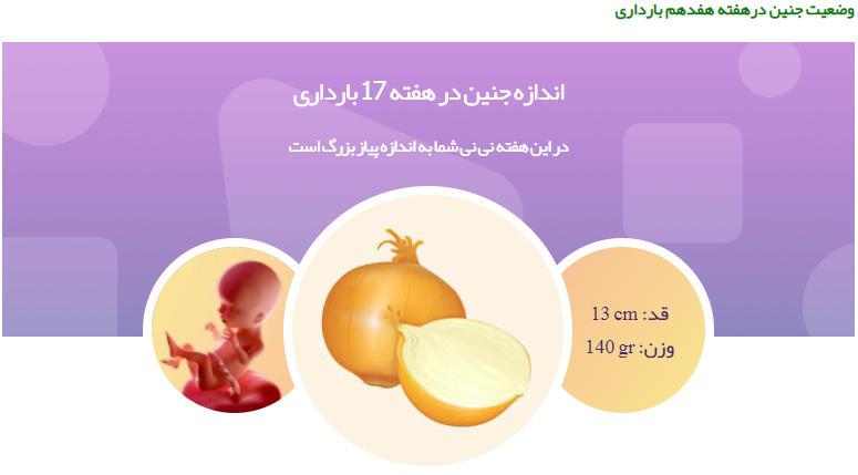وضعیت جنین در هفته هفدهم بارداری
