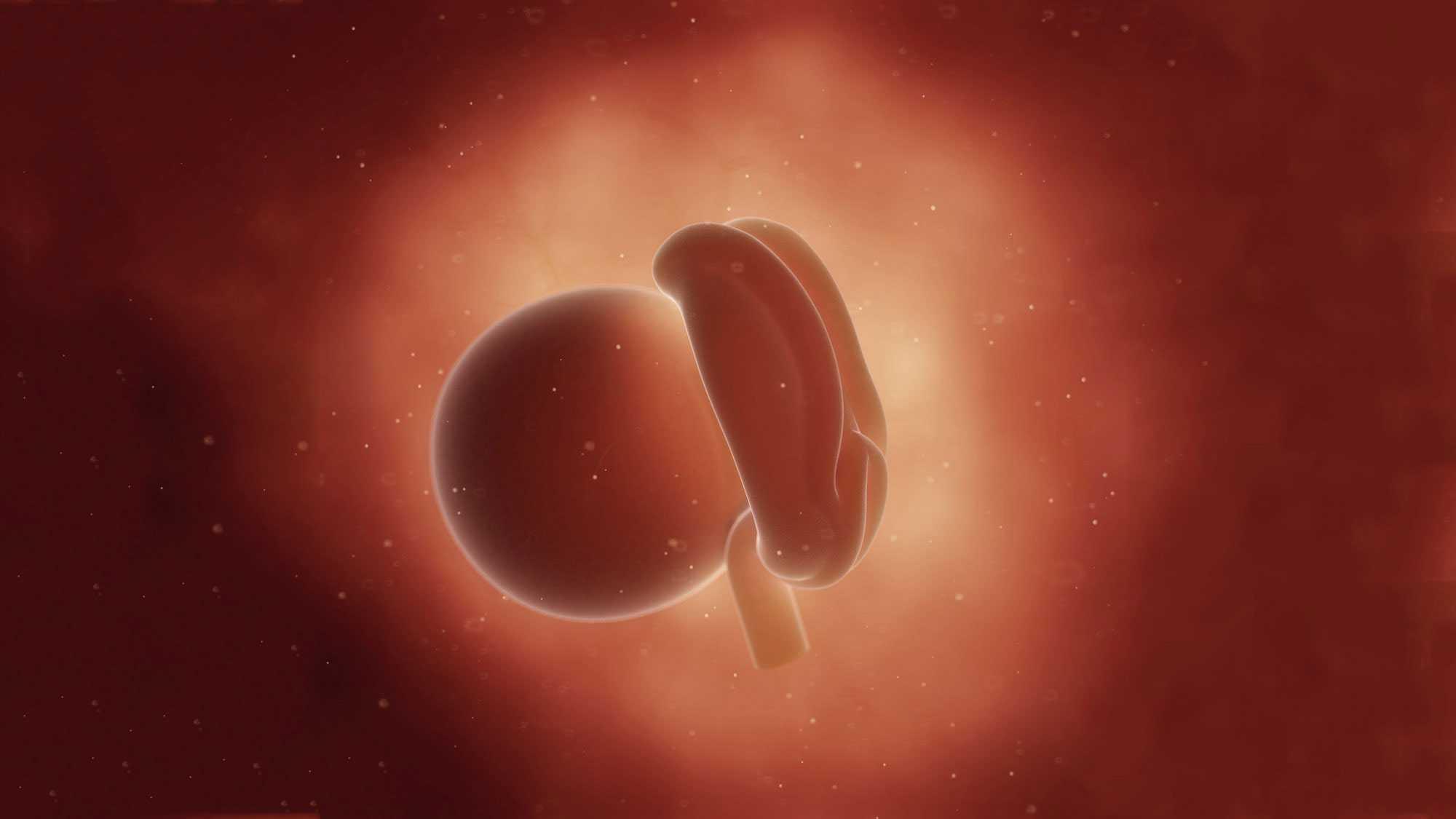 رشد جنین در هفته چهارم