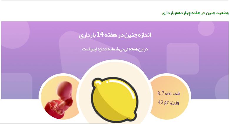 وضعیت جنین در هفته چهاردهم بارداری1