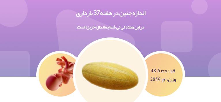 وضعیت جنین در هفته 37 بارداری1