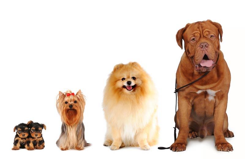 اندازه سگ ها