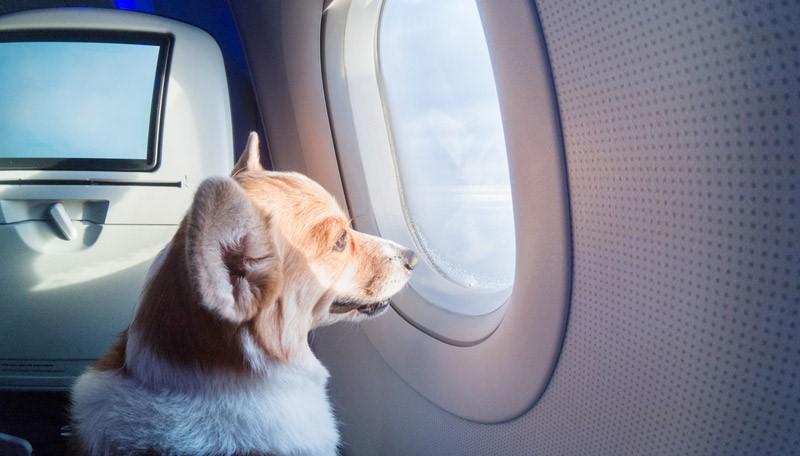 حمل و نقل حیوانات در سفرهای هوایی