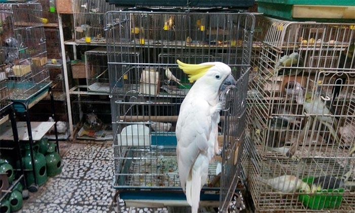 پرنده فروشی در رشت