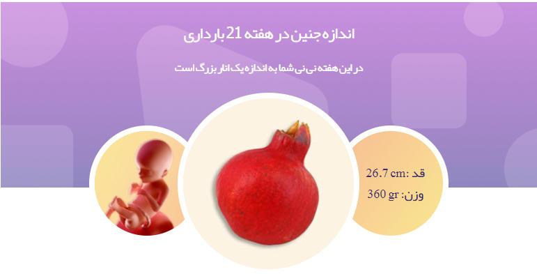 وضعیت جنین در هفته بیست و یکم بارداری