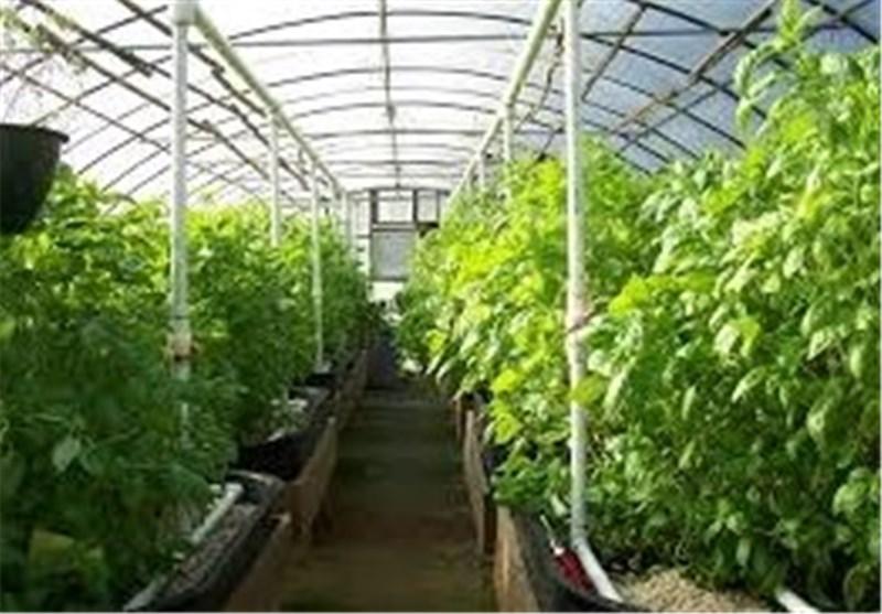 کشت گلخانهای 6 برابر صرفهجویی آب