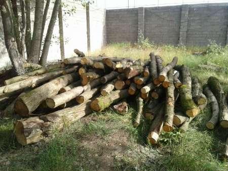 چوب قاچاق