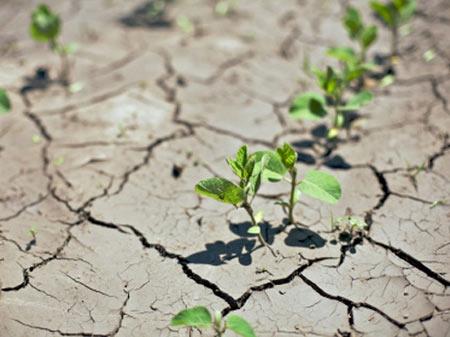 گیاهان مقاوم به خشکی