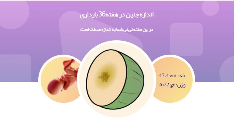 وضعیت جنین در هفته 36 بارداری1