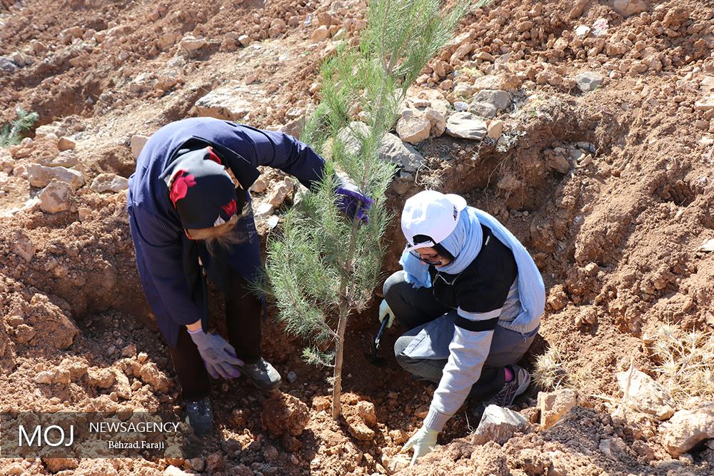 جشن هفته درختکاری در کرمانشاه