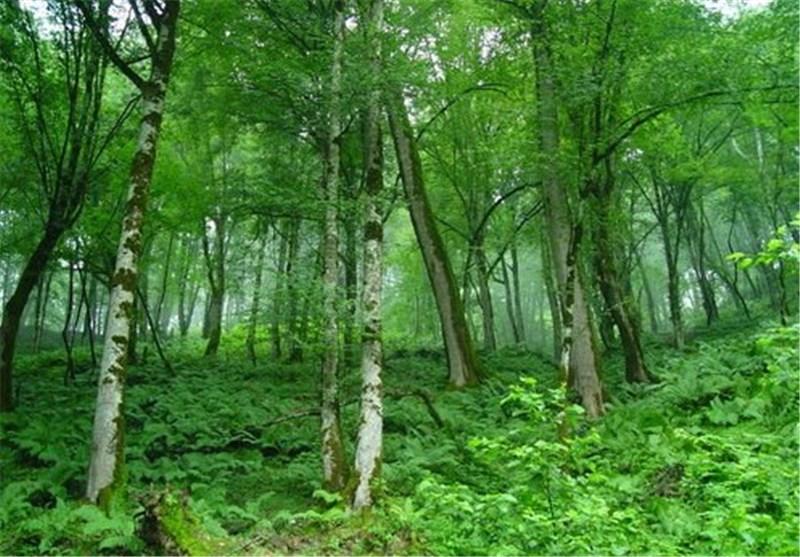 حکایت جنگلهای ایستاده بر مرگ