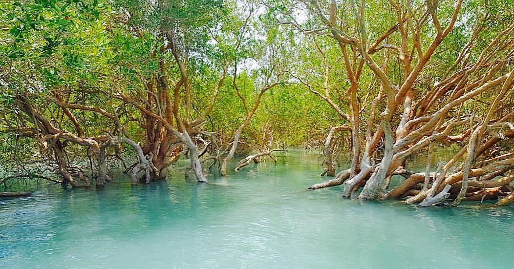 جنگل حرای جزیره قشم