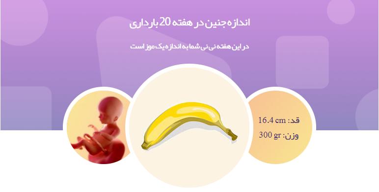 وضعیت جنین در هفته بیستم بارداری