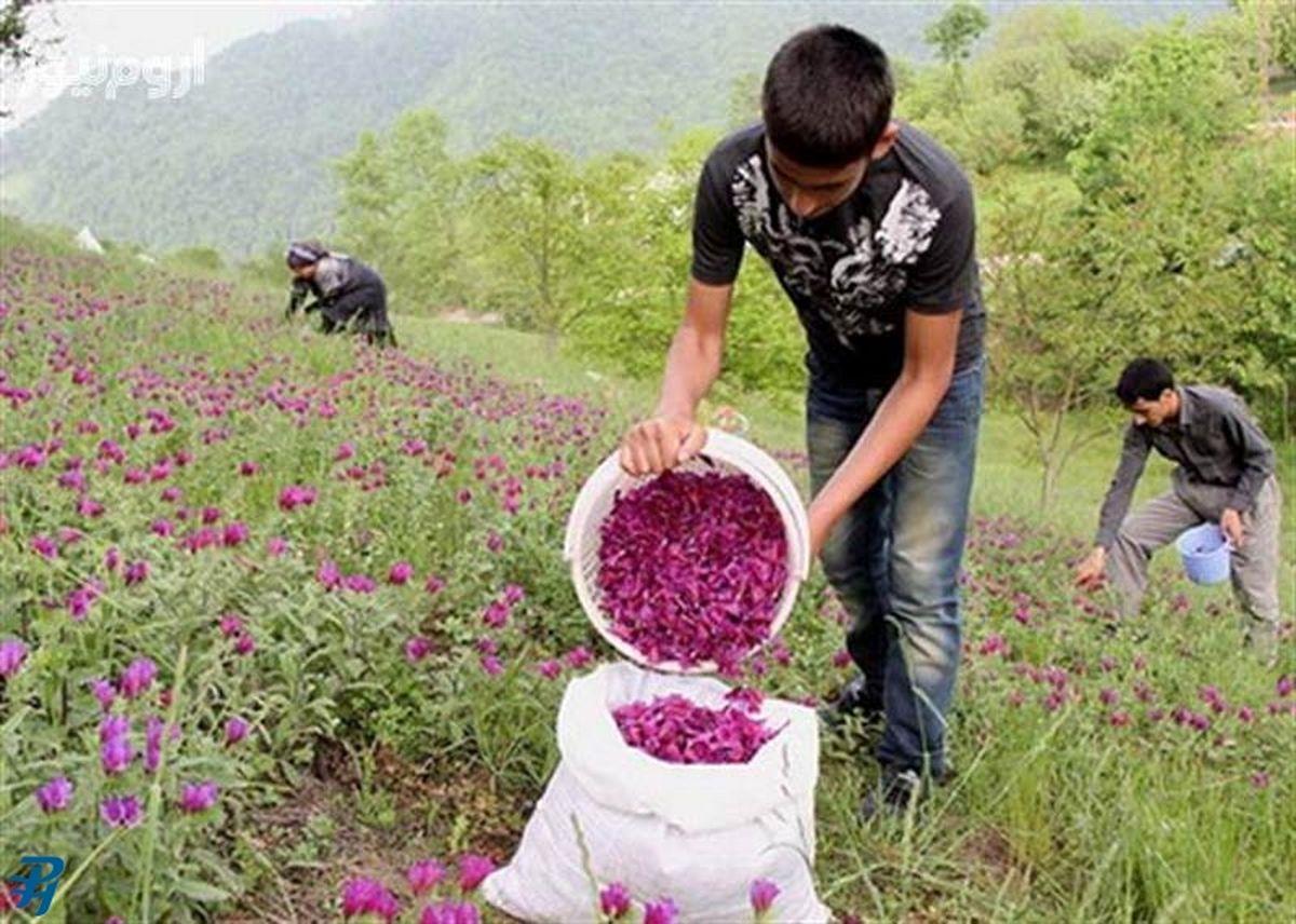 مجوز شهرک صنعتی غیردولتی گیاهان دارویی در حال نهایی شدن است