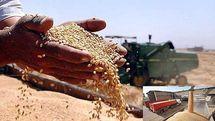 دولت قیمت خرید تضمینی گندم را ۱۷۰۰ تومان اعلام کرده است