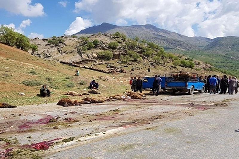 راننده کامیون، 45 راس گوسفند را در منطقه کاکارضا زیر گرفت
