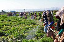 تعرفه واردات سموم ۲۰ درصد افزایش یافت / به کشاورزان خیانت میشود