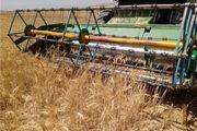 افزایش دو برابری تولید بذر اصلاح شده گندم در کشور