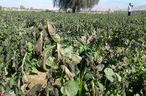 سرمازدگی محصولات کشاورزی، کمر اقتصاد عنبرآباد را شکست