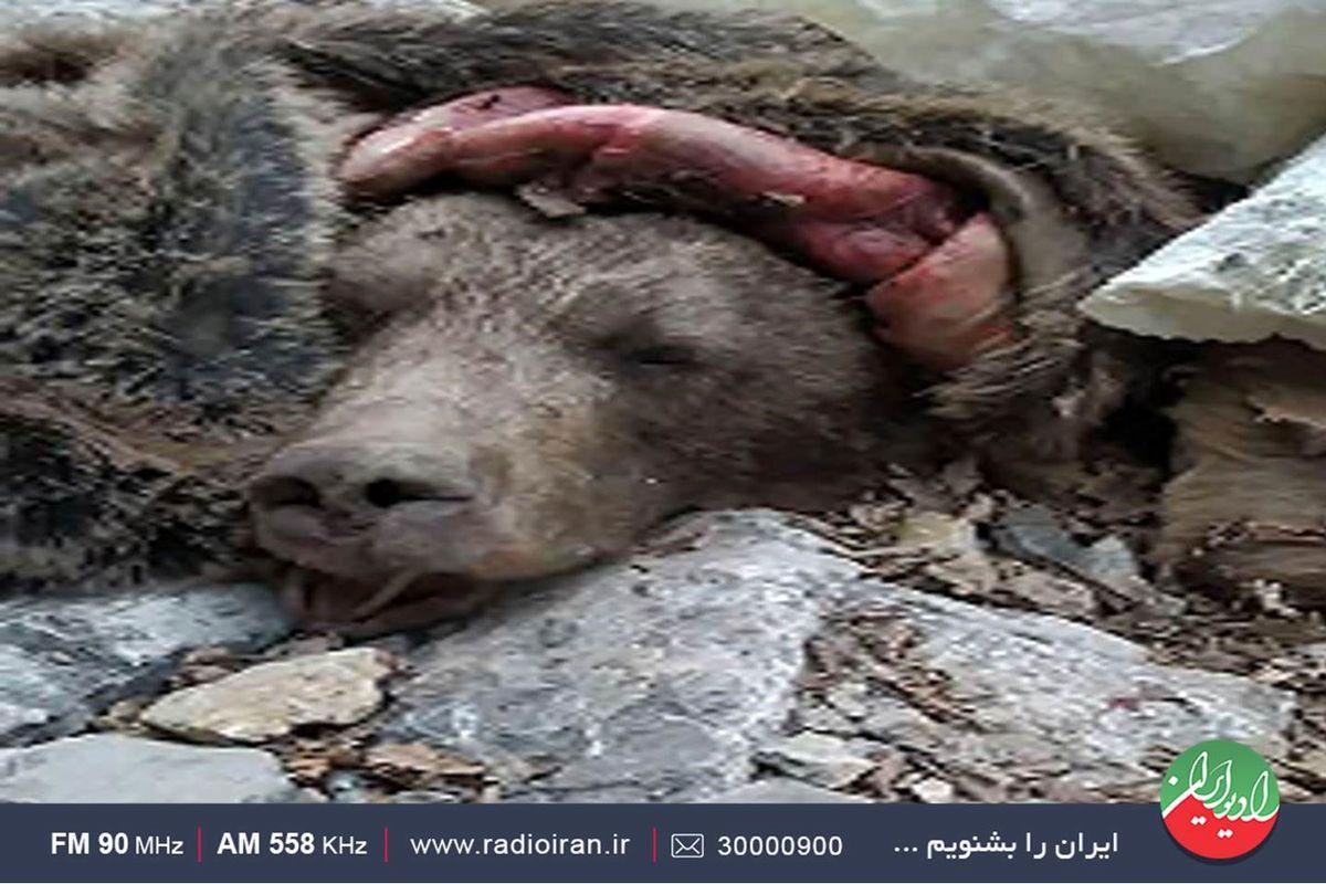 جزئیات مثله کردن بی رحمانه یک خرس در پارک ملی پابند/ واکاوی در رادیو ایران
