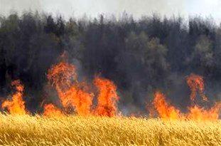 آتش کشیدن سرمایه زمینی توسط کشاورزان مازندرانی