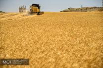 بانک کشاورزی 45000 میلیارد ریال بهای گندم را به حساب کشاورزان واریز کرد