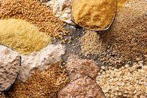 تولید 20 میلیون تن گندم در سال زراعی جاری