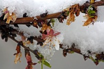 سرمای دیررس بهاره در راه است