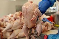 علت گرانی گوشت مرغ اعلام شد/ کاهش 150 تومانی این محصول پروتئینی
