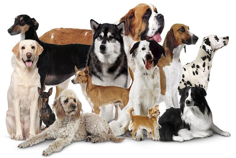 خصوصیات سگ ها و هرآنچه در مورد سگ ها با نژاد مختلف باید بدانید