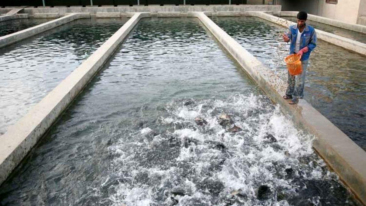 تربت حیدریه، موفق به تولید بیش از ۳۰۰ تن ماهی شد