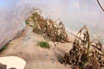 تمهیدات لازم در خصوص جلوگیری از سرمازدگی محصولات کشاورزی صورت پذیرد