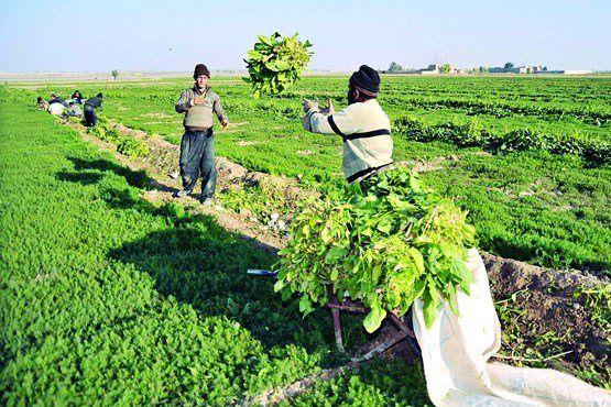 اعلام شرایط صادرات کالاهای کشاورزی از ایران به اندونزی