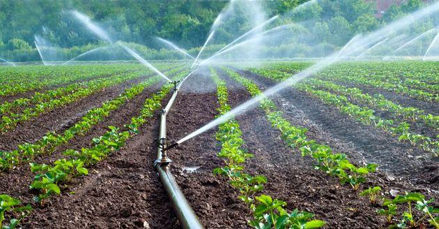 بیش از ۴۰ هزار  هکتار آبیاری تحت فشار با استفاده از سیستمهای نوین آبیاری رکورد تولید گندم را زد
