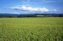 توسعه کشت در زمینهای بایر کشاورزی