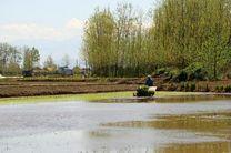 آغاز نخستین نشاء مکانیزه برنج در استان گیلان