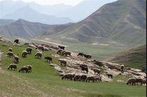 خشکسالی و بهره برداری بی رویه، عامل اصلی از بین رفتن مراتع خراسان رضوی است