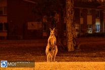ادامه آتش سوزی در جنگل های استرالیا