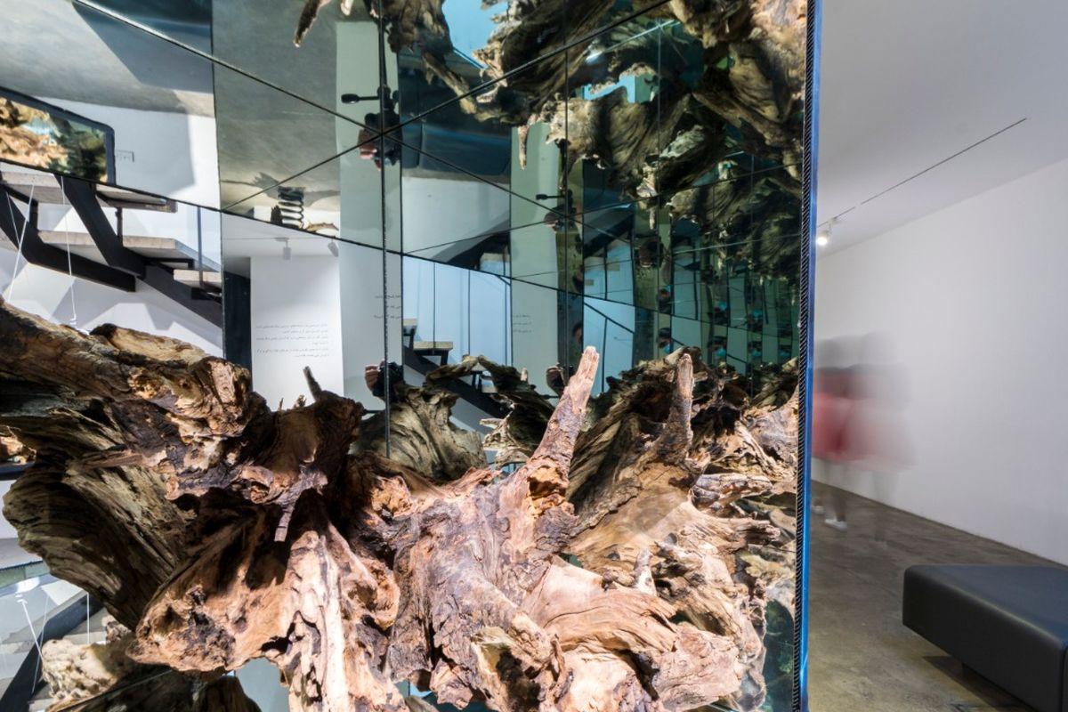مشتری آثار اینستالیشن چه کسی است/نمایشگاهی با ریشه های درختان صد تا پانصد ساله