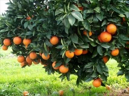 توصیههای اردیبهشتی هواشناسی کشاورزی