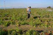 15 میلیون وام برای کشاورزان تهرانی