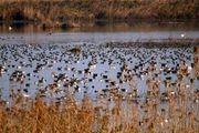 جمع آوری ادوات مخصوص صید پرندگان از پارک ملی بوجاق