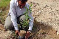 مشارکت مردم در احیای اراضی بیابانی/کاشت نهال توسط مردم جاسک