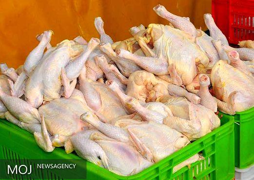علت افزایش بی سابقه قیمت مرغ مشخص شد / مرغ گران می شود